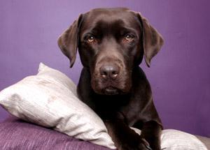 strata management news pets
