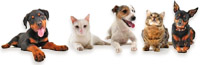strata management | strata laws impacting pet owners