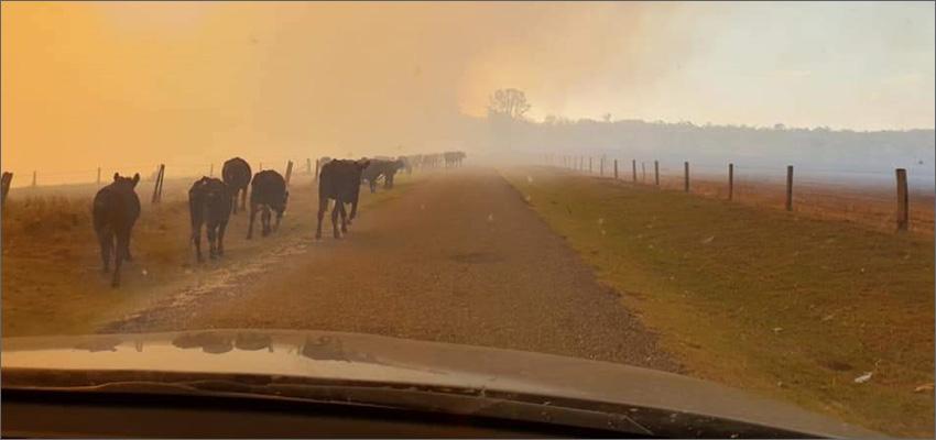 news farmers conti strata